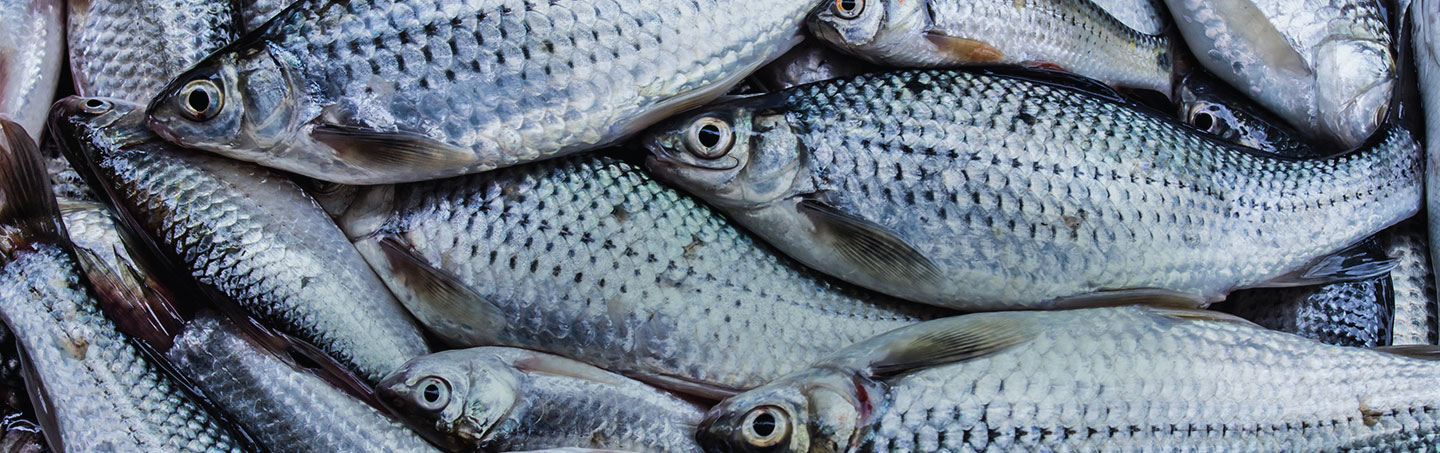 Cryovac Seafood Packaging Systems