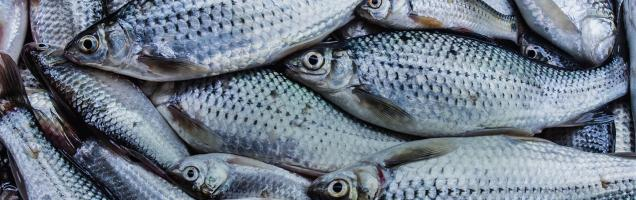 Cryovac Seafood Packaging Materials